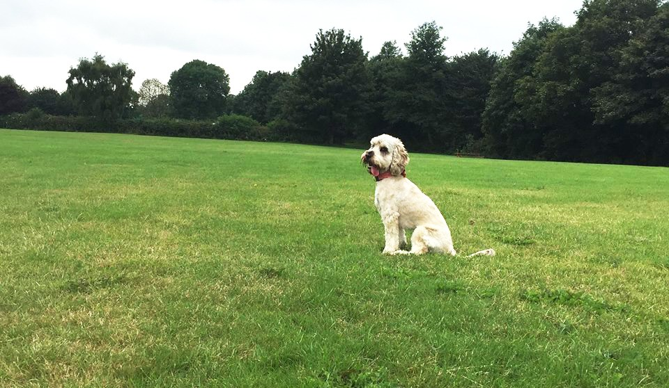 Leicestershire Dog Walkers